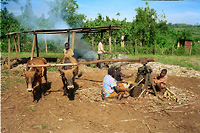 Photo of Local sugar production,         Luo-land, Kenya.